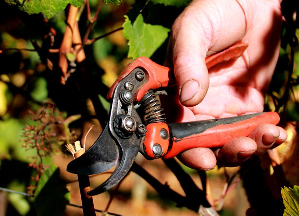 sécateur manuel, Vins Lapalus